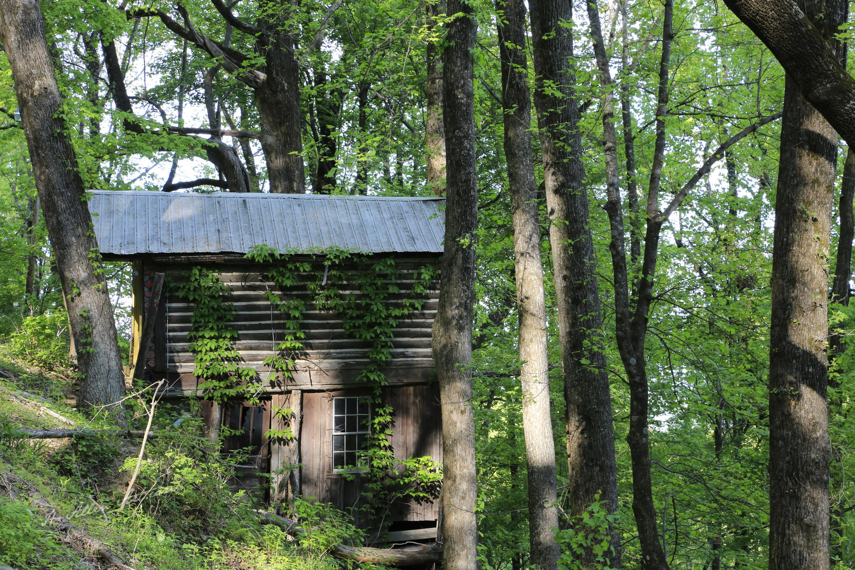 Cabin in the Woods, Wildacres, Blue Ridge Parkway, Little Switzerland, NC