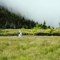 Plein Air Artist, Rhododendron Time, Roan Mountain, NC-TN